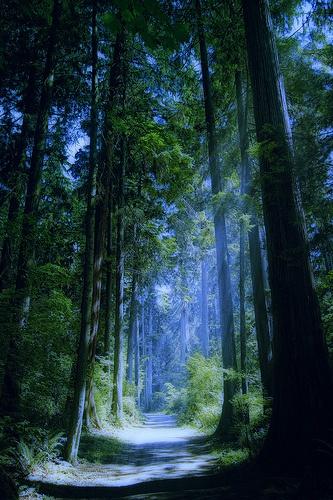BlueForest, Vancouver