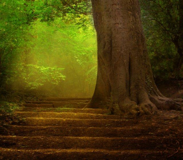 StepsIntheForest