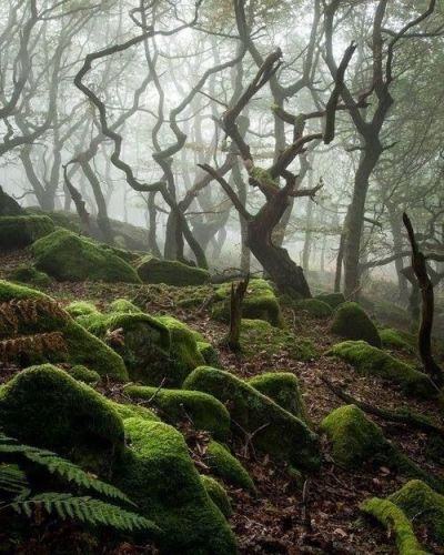 Dark Forest, England